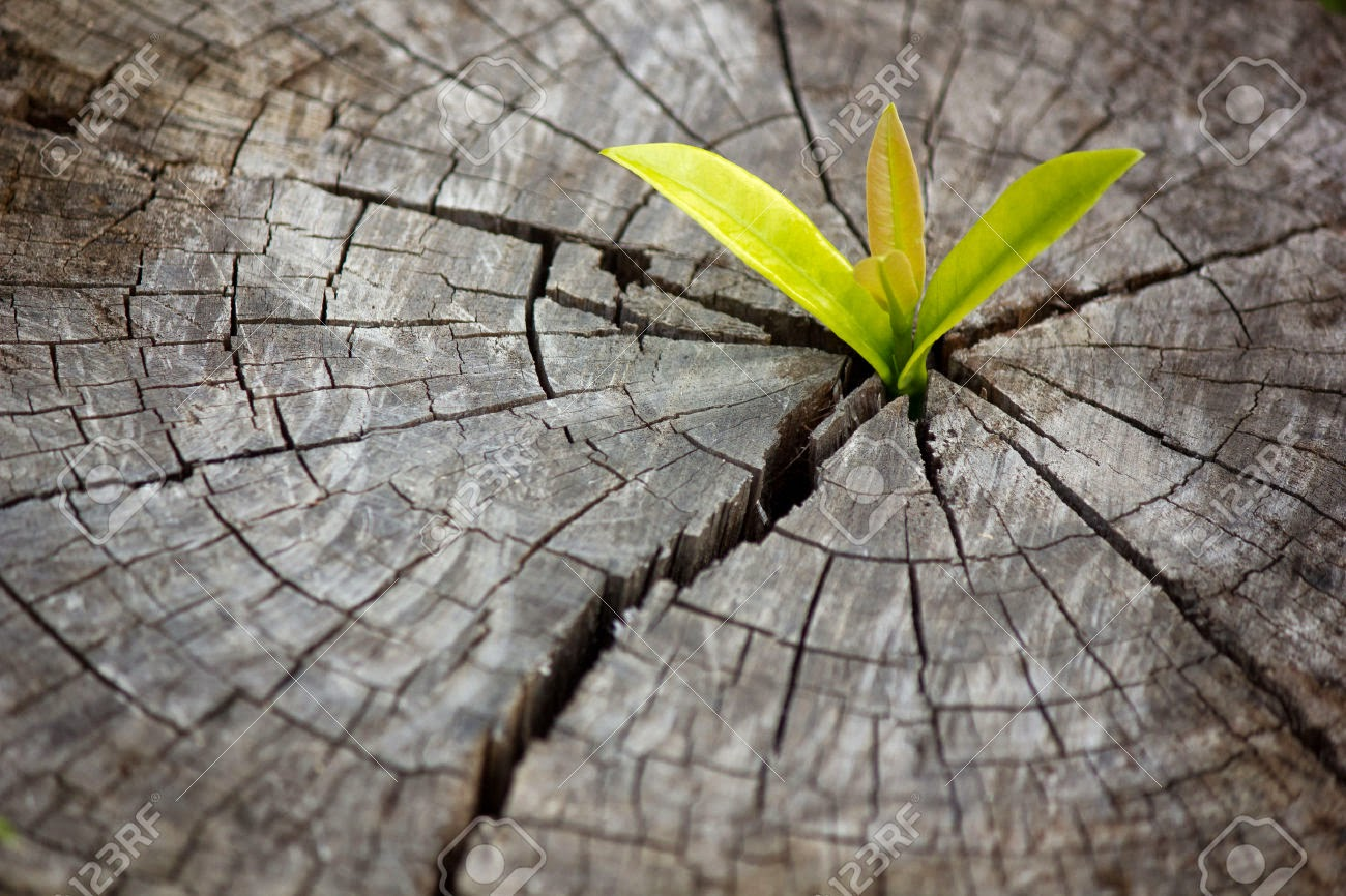 Image result for a shoot from a stump images