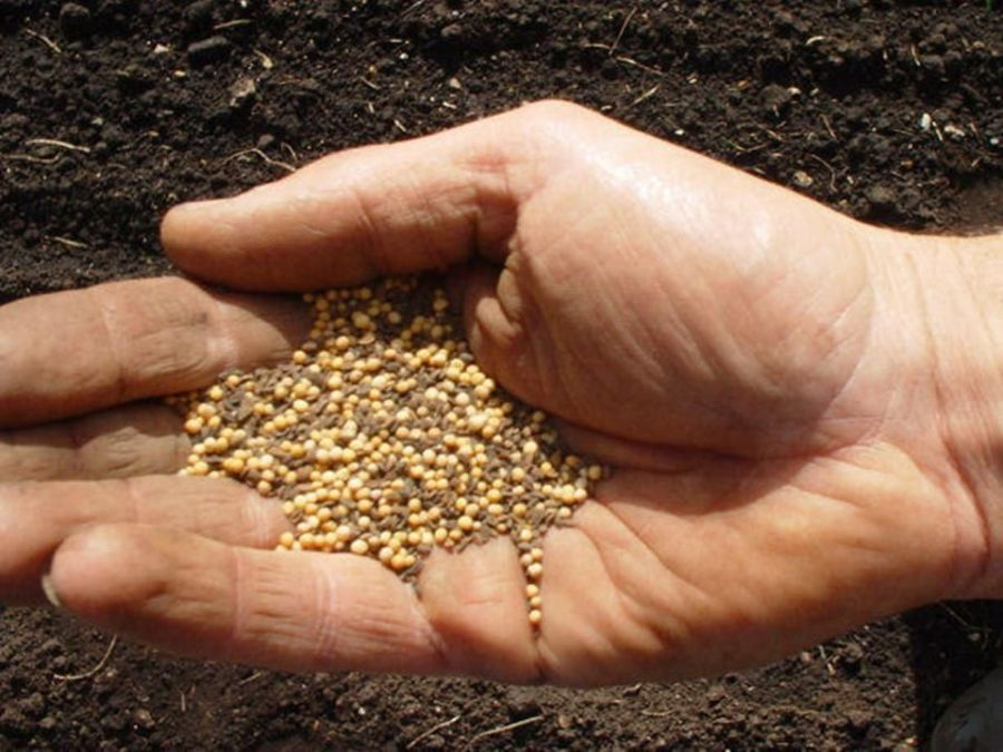 Image result for mustard seed in a hand images
